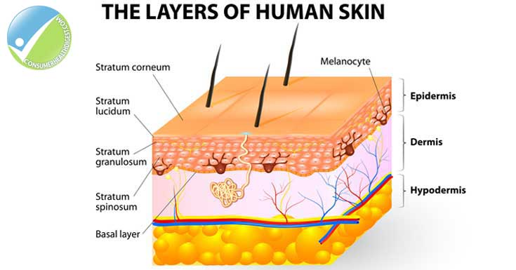Layers-of-the-skin